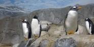 Tennessee Aquarium Penguins