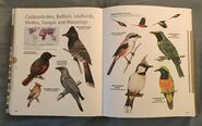 Visual Dictionary of Animals (95)