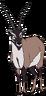Better the Tibetan Antelope