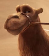 Cyrus the Camel