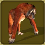 Orangutan Adult M