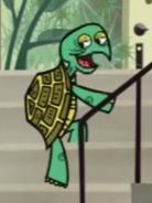 Shelley Turtle