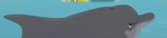 South Park Dolphin