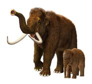 Tale of the Woolly Mammoths