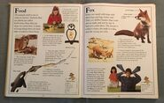 The Kingfisher First Animal Encyclopedia (29)