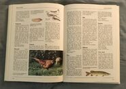 The Kingfisher Illustrated Encyclopedia of Animals (118)