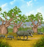 ZT-African Warthog