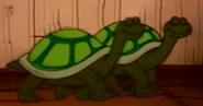 Beginner's Bible Tortoises