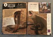 Scaly, Slippery Reptiles (6)