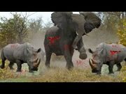 The Elephant and the Rhinos