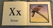 The New Alphabet of Animals (24)