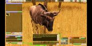 Wildlife Park Wildebeest