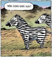 Windy Zebras