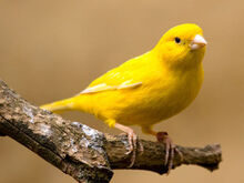 1322867162 canary-6