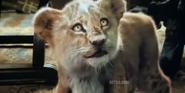 Dolittle Lion