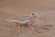 Gecko, web-footed