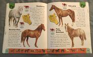 Horse Dictionary (18)