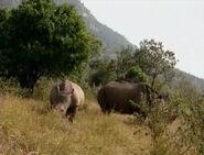 HugoSafari - Rhinoceros04