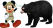 MM Andean Bear
