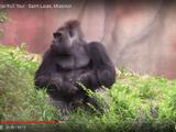 Primates, Inc.