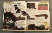 DK First Animal Encyclopedia (64)
