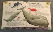 Extreme Animals Dictionary (21)