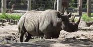 Sedgwick County Zoo Rhino