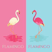 Flamingo In Two Colors