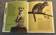 The Dictionary of Ordinary Extraordinary Animals (31)