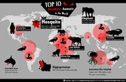 The Largest Dangerous Animal is the Elephant