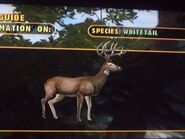 The white tailed deer 1 by darcygagnon-d8dq4ix