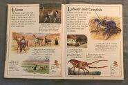 The Kingfisher First Animal Encyclopedia (42)