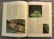 The Kingfisher Illustrated Encyclopedia of Animals (28)