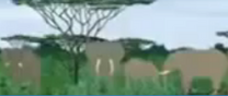Kirikou Elephants