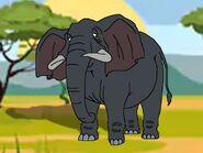 Rileys Adventures African Bush Elephant
