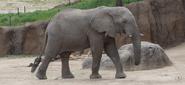 Dallas Zoo Elephant
