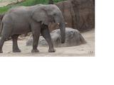 List of Species in Dallas Zoo