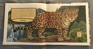 Gone Forever! An Alphabet of Extinct Animals (8)