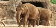Honolulu Zoo Elephants