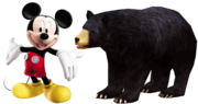 MM American Black Bear