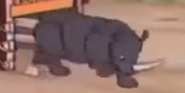 Silly Symphony Rhino