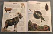 DK Encyclopedia Of Animals (149)