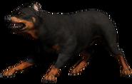 FC4 Animal (27)