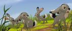 Hare TLG