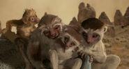 Lemur-family