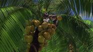 Madagascar-disneyscreencaps.com-7646