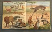 My First Book of Animals from A to Z (20)