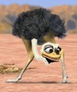 Ostrich jungle beat
