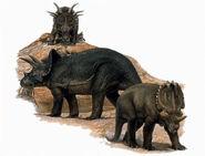 Ceratopsidae-encyclopedia-3dda