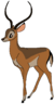 Iago the Impala
